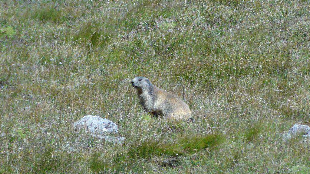 Col de la Vanoise - Marmotte