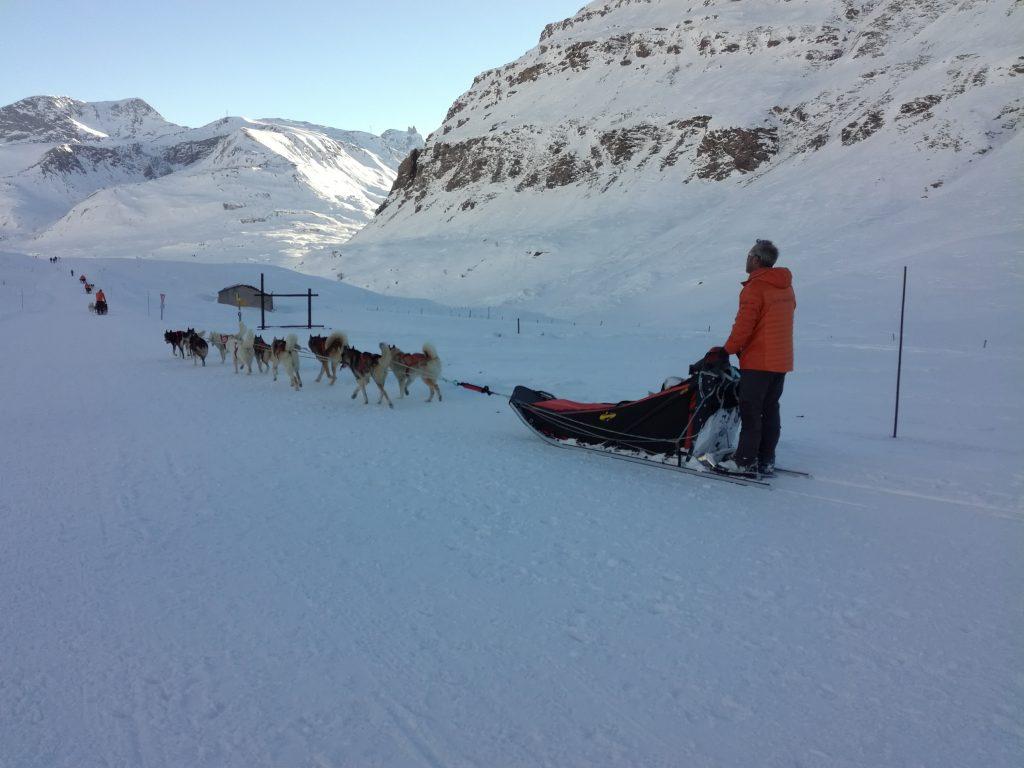 Chiens de traîneau à la base polaire du Mont Cenis
